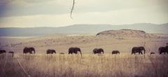 Lewa Downs - elephants