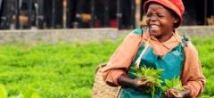 Rwanda tea plantation - Nyungwe Forest Lodge