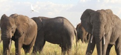 Manyara-Ranch-Camp - elephants