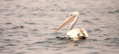 Rubondo Island Birding