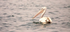 © Rubondo Island birdlife