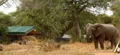 Elephant in Mdonya