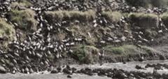 Migration crossing at Serian