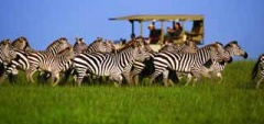 Itineary photo - Zebra