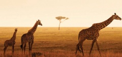 Family safaris - Serengeti