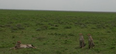 Client photo - Ngorongoro