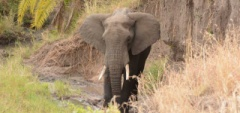 Client photo - Serengeti