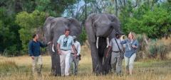 Abu Camp - Elephant Interaction