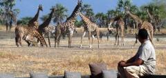 Chem Chem Lodge - safari