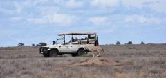 Kusini Camp - game drive