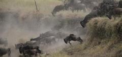 Lemala Kuria Hills - wildebeest migration