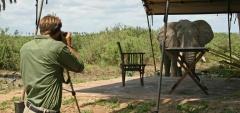 Lake Manze Camp - elephant in camp