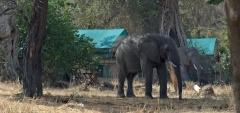 Mdonya Old River Camp - elephant