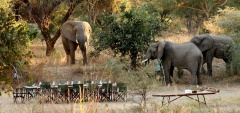 Mdonya Old River Camp - Elephants