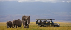Amboseli National Park - Elephants
