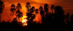 Selous Game Reserve - Sunset