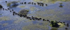 Okavango Concession