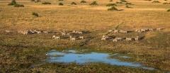 Okavango Concessions