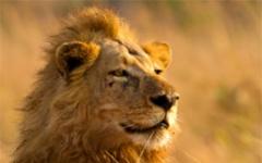 © Katavi Wildlife Camp