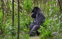 Itineary photo - Rwanda