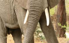 Itinerary photo - elephant