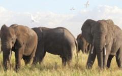 Manyara-Ranch-Camp - elephants