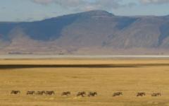 Itineary photo - Safari