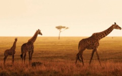 Family safaris - Serengeti