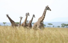 Itinerary photo - masai mara
